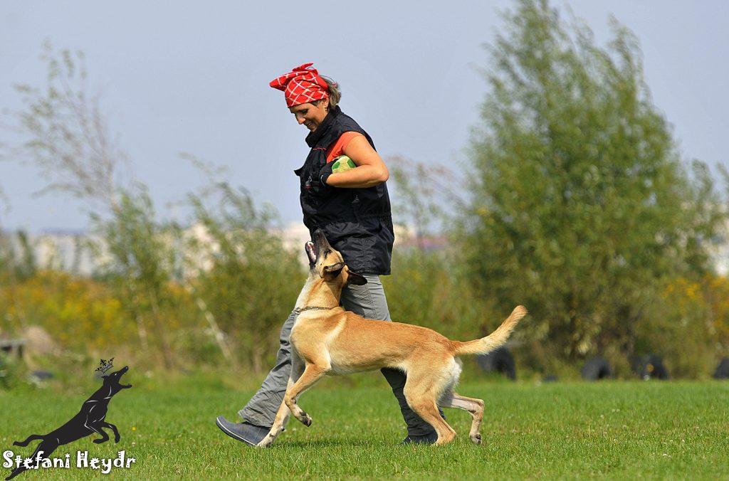 Дрессировка собак методами, основанными на мотивации