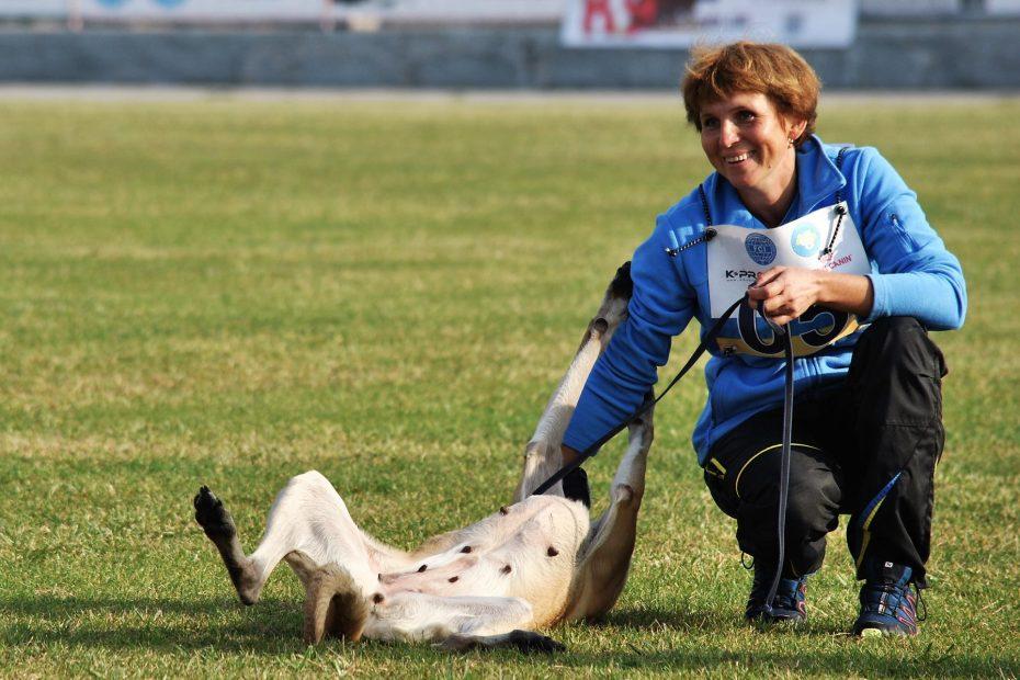 Собака для спорта