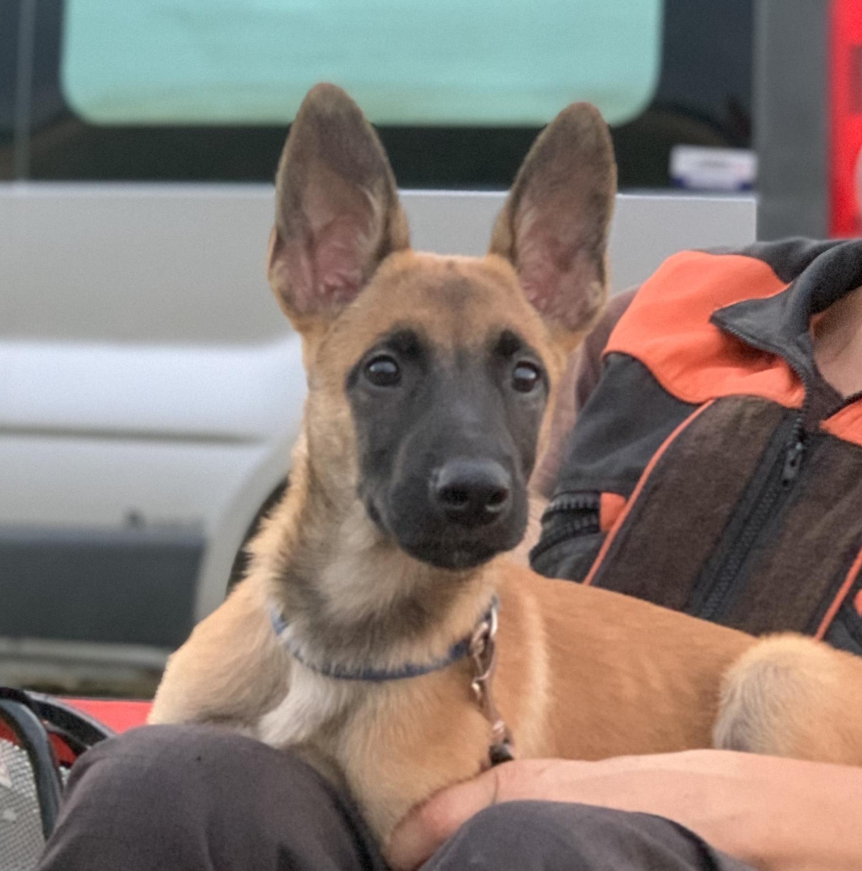 Собака (в частности, малинуа) и путешествия